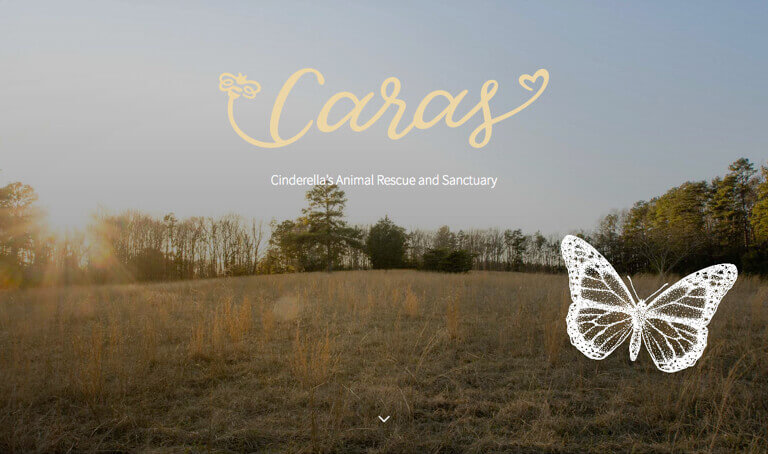 Screenshot of CARAS